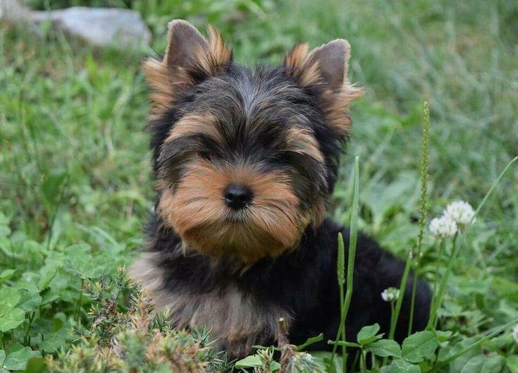 Pets for adoption colorado