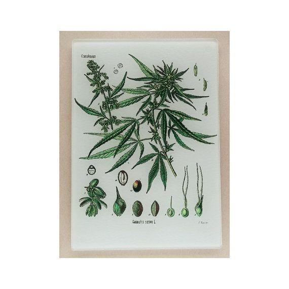 Cannabis Sativa Glas schneiden, Brett, Marihuana Kunst, Marihuana-Glas, Cannabis Untersetzer, Cannabis-Glaskunst, Marihuana Untersetzer, Cannabis-Geschenk