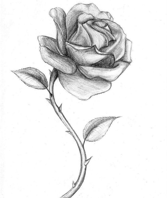 1001 + modèles et conseils pour apprendre comment dessiner une rose | Roses drawing, Rose sketch ...