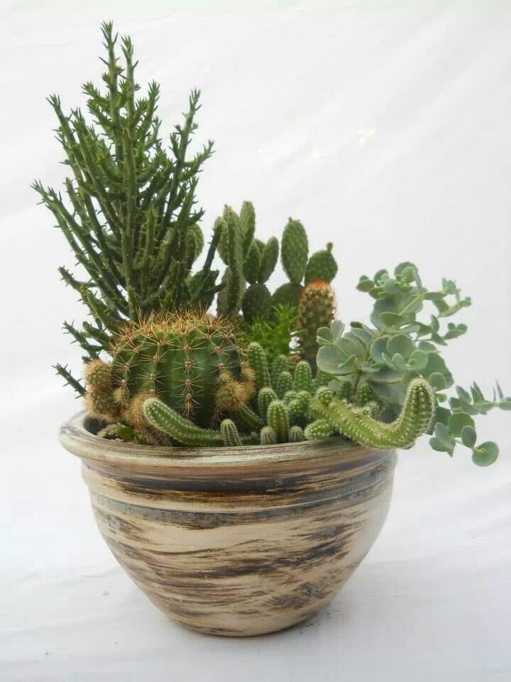 cactus pot catus pinterest. Black Bedroom Furniture Sets. Home Design Ideas