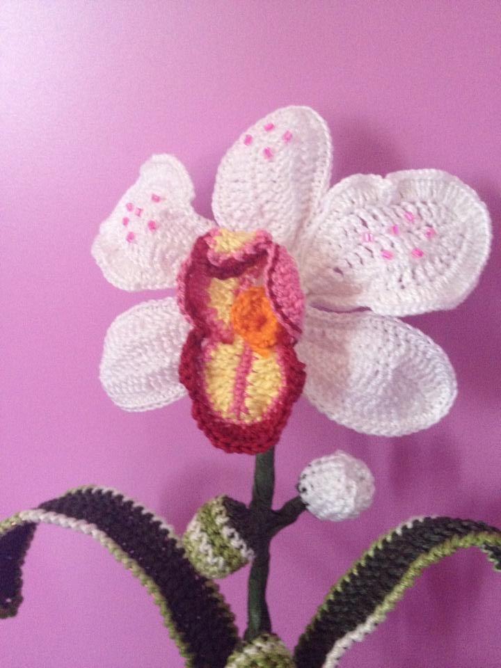 Orchidea grande
