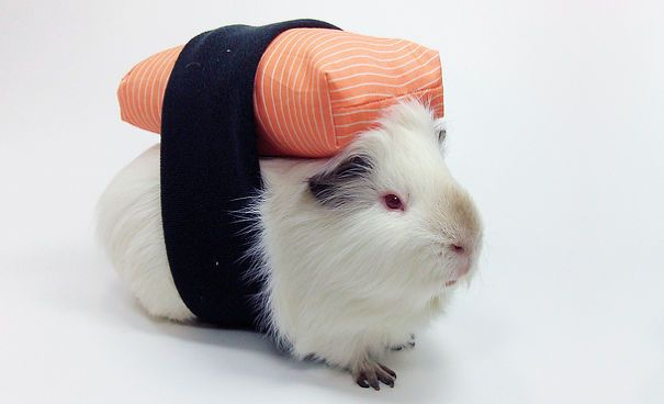 By far the greatest halloween pet costume ever conceived. Sushi guinea pig. Only works on rice-coloured pets though.