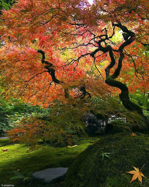 Portland Japanese Garden, Portland, OR     http://www.timemart.vn/  http://www.timemart.vn/305/p/322093/may-giat.html  http://www.timemart.vn/305/pr/337018/XPB20-1801/may-giat-mini-little-duck-xpb20-1801.html