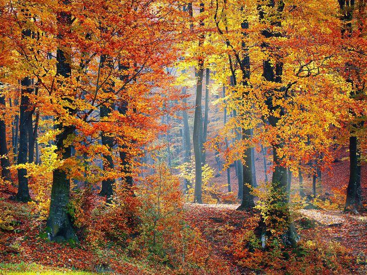 5 cosas que no sabías sobre los bosques