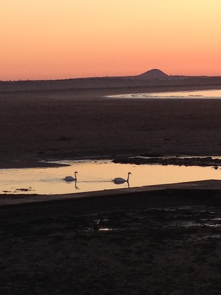 Home. Belhaven Beach. Swans. North Berwick Law