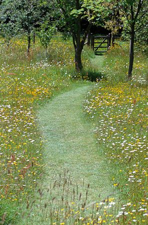 Let your lawn go!! Wild flowers with a simple path mowed right through the middle...