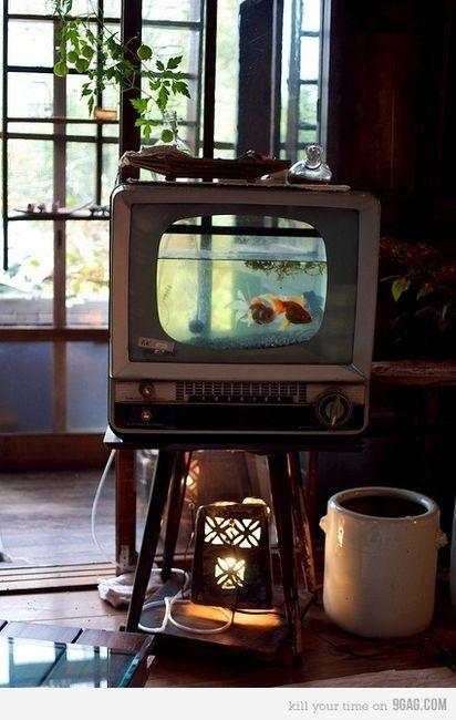 fish fish fish aquarium in old TV. Upcycling.