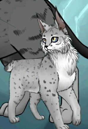 Kit:Lynxfur. His parents: Midnightstar and Unknown lynx. Age:4,5 Mounts. His born in:Moon clan