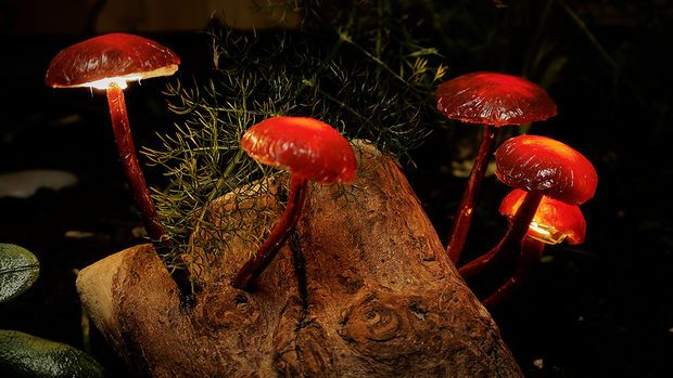 Enchanted Forest Mushroom Lights  http://www.instructables.com/id/Enchanted-Forest-Mushroom-Lights/?ALLSTEPS