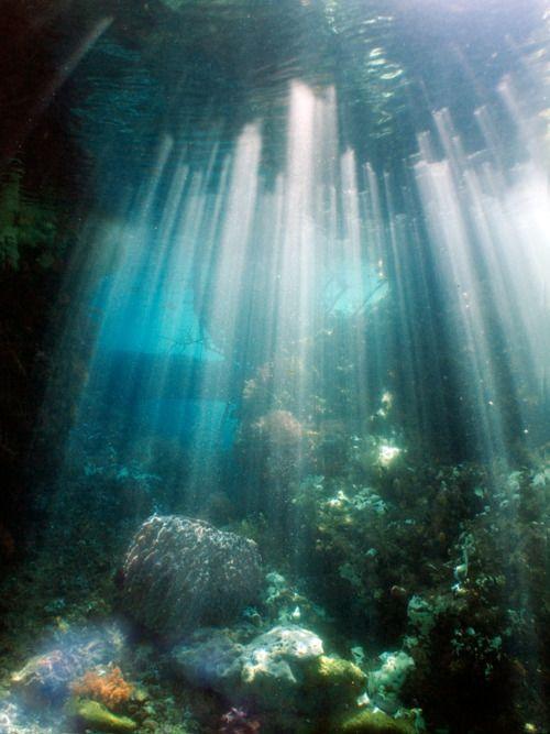 Underwater: Stunning Photography, Natural Scene, Sun Ray, Raja Ampat Islands, Scubas Diving, Underwater Photography, Beautiful Photography, Ocean Photography, Rajaampat