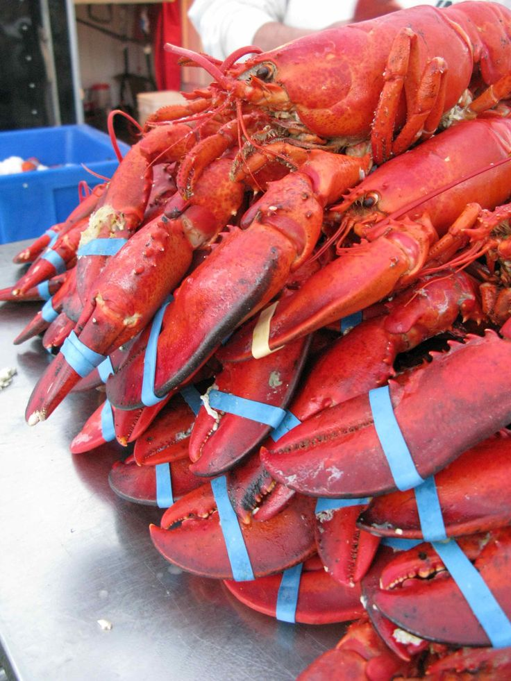 Lobsters moncton fish market and fredericton farmers for River fish market