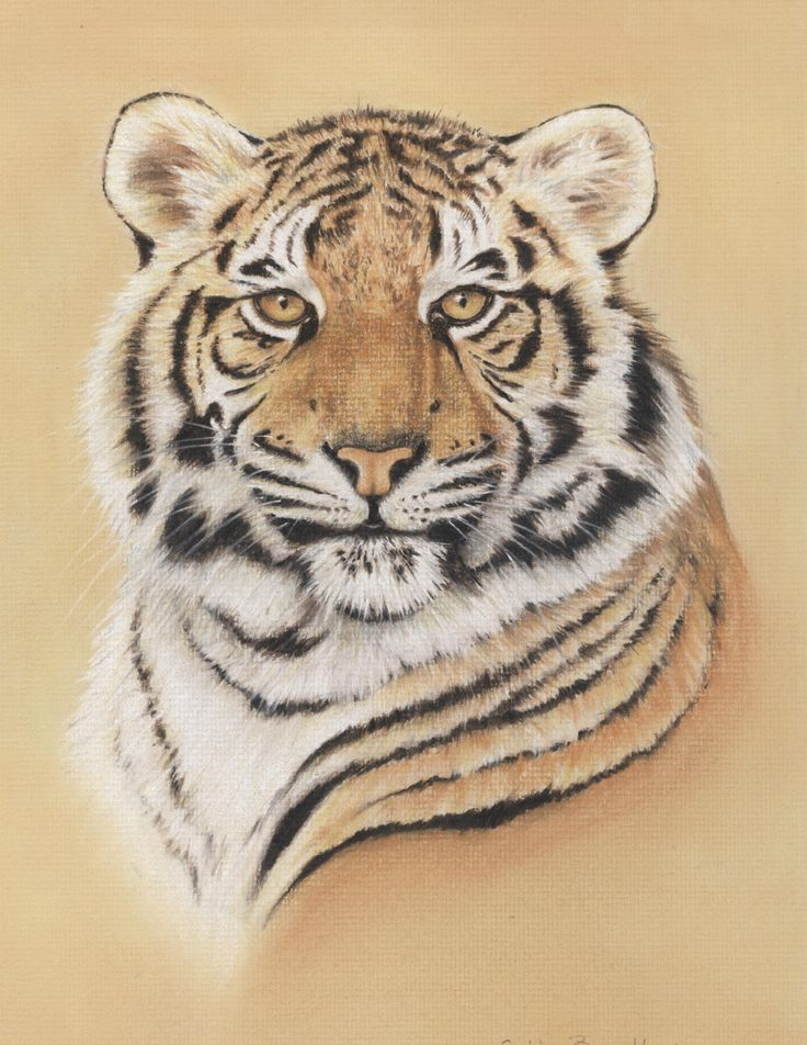 Difficulty: BeginnerLearn how to draw this Portrait of a Tigerusing Pastel Pencils. This picture was a starter pack that I sold thousands of in my years demonstrating and travelling to exhibitions around the UK.The starter pack includes an outline drawing, a reference picture and written instructions teaching you how to draw each section step by
