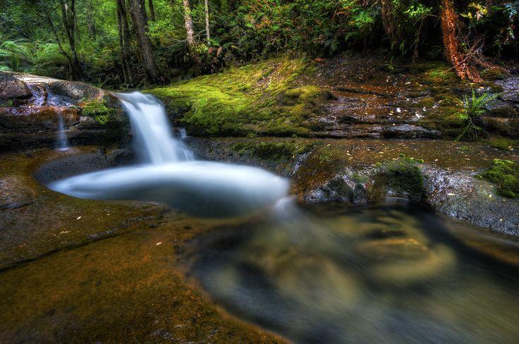 Rainforest of Tasmania - null