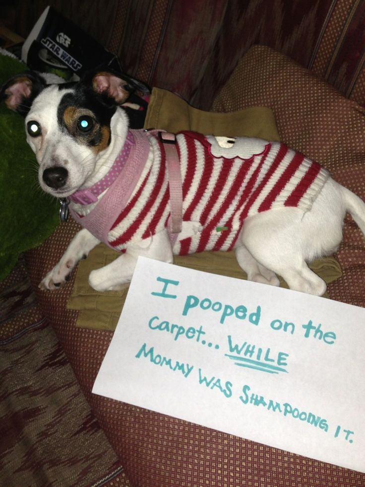 1000+ images about Animal Shaming on Pinterest | Cats ...