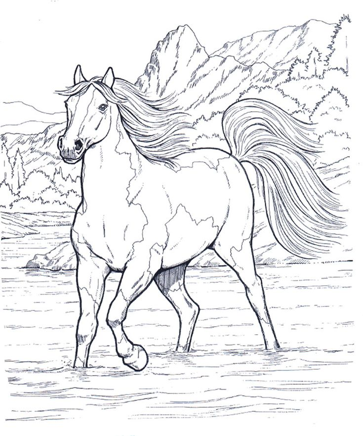 My Favorite Horse Colouring Pages
