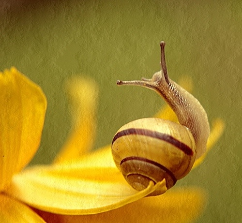 Waving Snail by Eleni.D: Eye, Going Buggy, Slow Movers, Enjoy Life, Creepy Crawlys, Frogs Snails Turtles, Crawling Insects