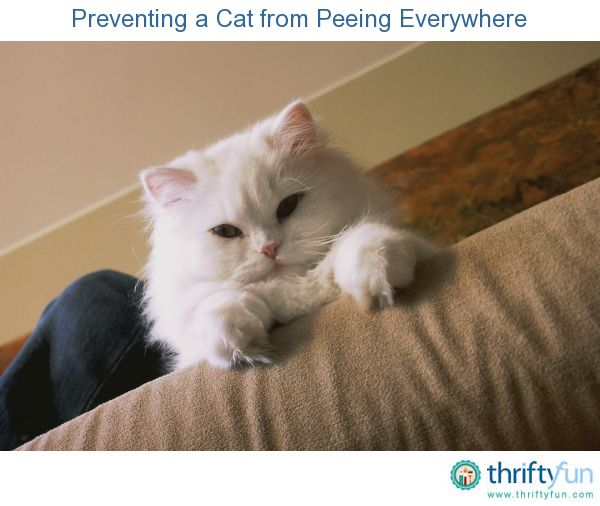 How To Stop Cat Weeing Everywhere