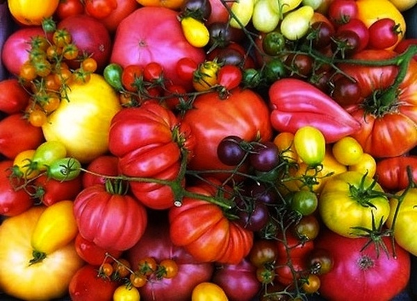 how to grow better tomatoes