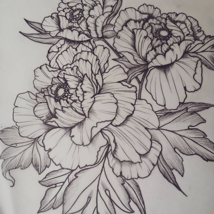 Peonies! For appointments please email bethanielwilson@gmail.com