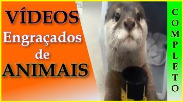 Videos Engraçados de Animais – Vídeos Engraçados com Gatos,Cachorros e Outros Animais
