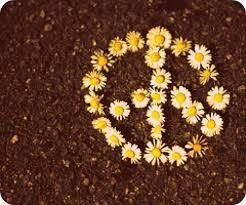 Daisy Peace Sign