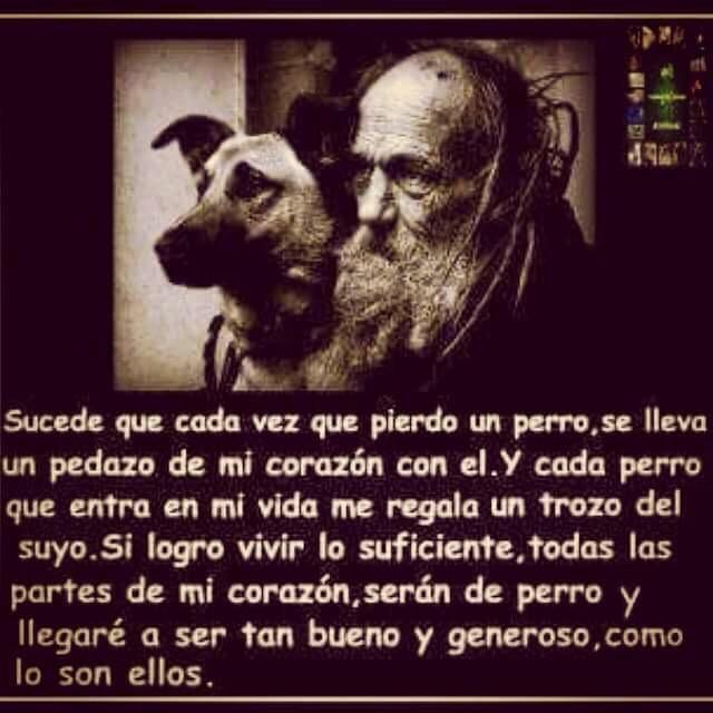 """RT: """"@Chacala7   """"/Por eso si me toca ir al Cielo,q Dios me envie al de los perros @Chacala7 @LeoJabbasky @rescatamx"""