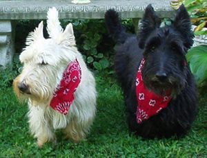 Mr. Tweed's Whimsical garden Scottish Terriers