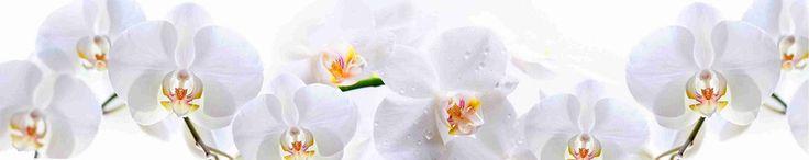 КФ-002 Белые орхидеи