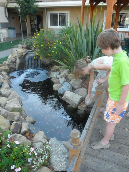 Best 25 Goldfish Pond Ideas On Pinterest Pond Fountains
