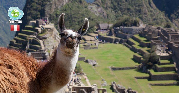 Como chegar a Machu Picchu? O Viajei Bonito lista todos os caminhos possíveis para chegar à cidade sagrada dos Incas, seja por trem, de bicicleta ou a pé.
