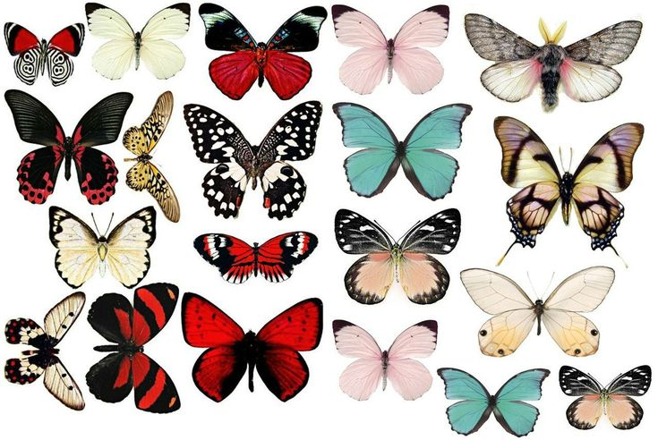 Декор стен своими руками с помощью бабочек: трафареты, материалы, способы…