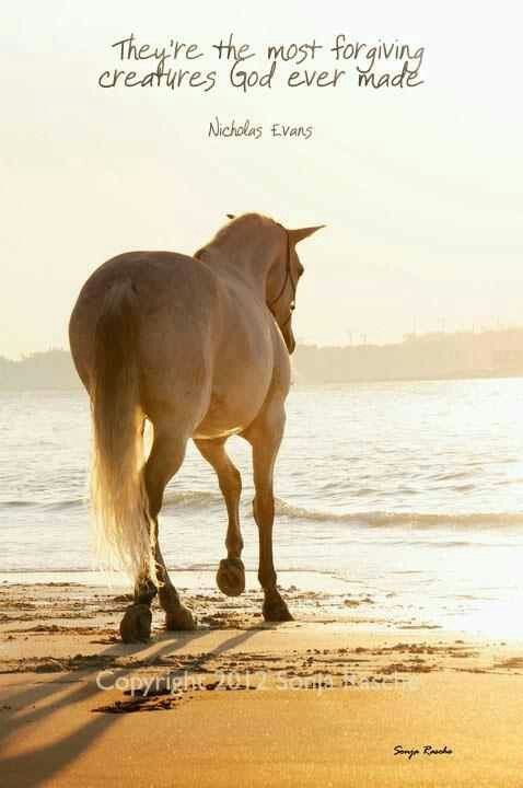 They're the most forgiving creatures god ever made...Quote by Nicholas Evans, Author of ''The Horse Whisperer''