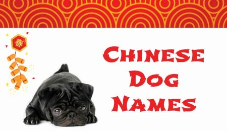 Chinese dog names are great for pugs, shih tzus, and other