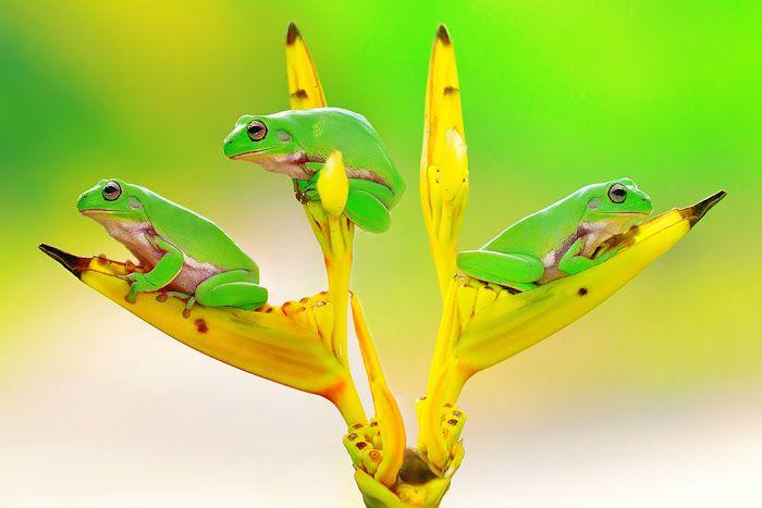 Animals photo by Sandi Nopri yanto