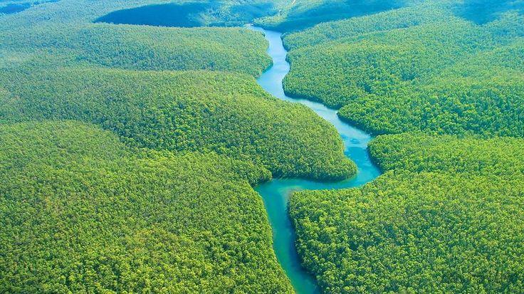 В джуглях Амазонки
