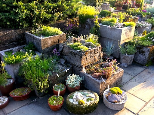 The alpine trough garden is famous at Wave Hill. I love how the gardeners stack the square hypertufa planters.