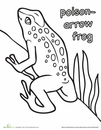 Worksheets: Poison Arrow Frog Coloring Page