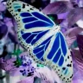 les plus beaux papillons du monde bing images butterfly pinterest recherche et papillons. Black Bedroom Furniture Sets. Home Design Ideas