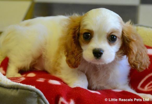 Buymydog Co Uk Is Uk Leading Pets Adoption Information Search