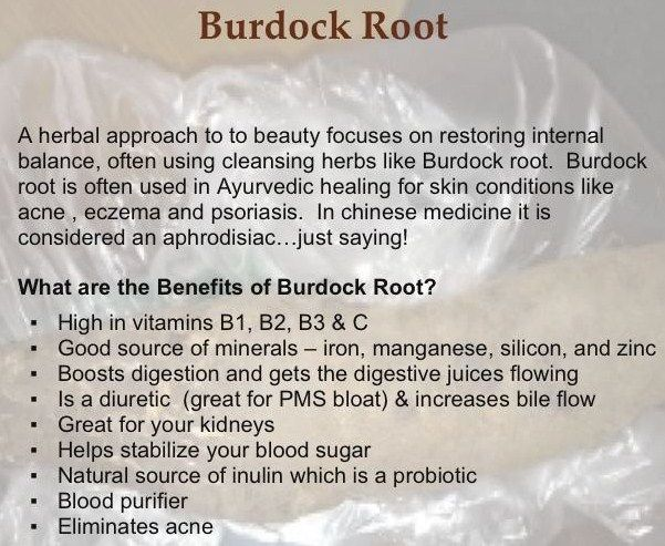 Health benefits of Burdock Root •Burdock: Helps alleviate fatigue and provides healthy, sustained energy boost throughout the day http://www.spxnutrition.com/flipmylife/