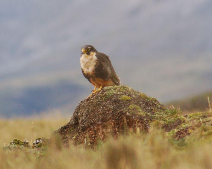 Travel with us to Ecuador-South America!!! www.greentrek.org/tours/
