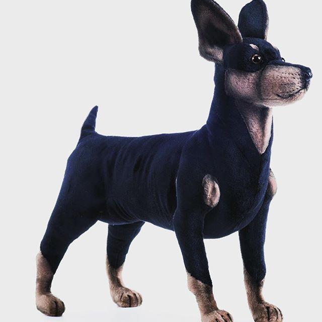 È reale oppure è Hansa!?🐶 #pincher #pinchers #pincherlove #dog #dogs #puppy #pets #animals #instaanimals #instadogs #gift #presents #peluche #toys #giocattoli #hansacreationitalia #nuovobrand #altaqualita #pupazzi #petshop #vetrine #instalike #sembravero #pincherlover #pinchermoments #pincherdog🐾 www.hansacreation.it vieni a scoprire il brand più animalesco nel mondo del giocattolo 🐾