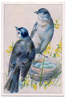 Old Fashioned Picture - Birds with Nest and Blue Eggs - The Graphics Fairy