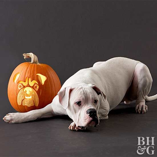 Luca is a 96-pound, 10-month-old American bulldog.
