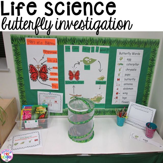 Life science investigation for preschool students - butterflies - with freebies