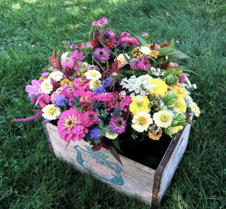 60 Best September Flowers Images On Pinterest Flower 400 x 300