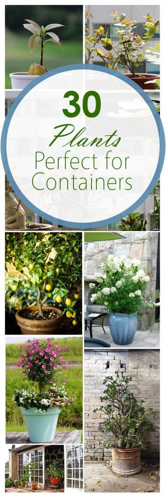 Container gardening, gardening hacks, popular pin, growing veggies in containers, flower garden, porch decorations, DIY porch decor.