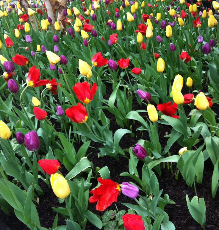 Silver Spring, Maryland