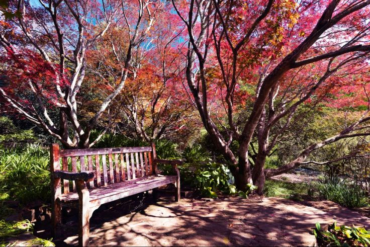 Autumn in the Blue Mountains NSW.