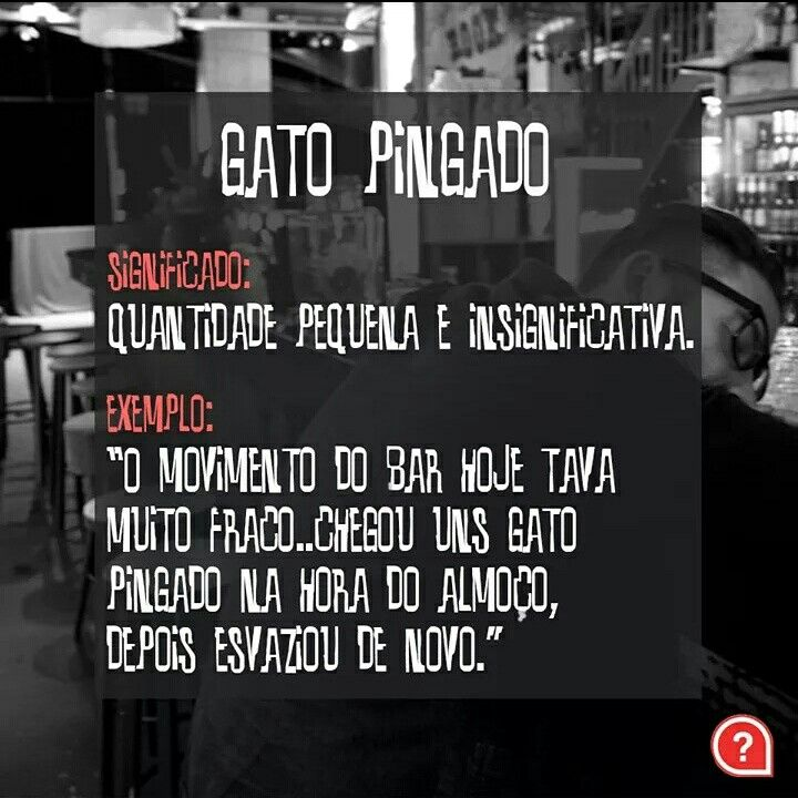 Movimento tava fraco...  #gatopingado #qualeagiria